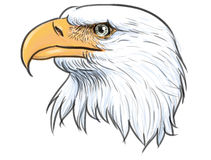 Bald eagle head color vector. stock illustration