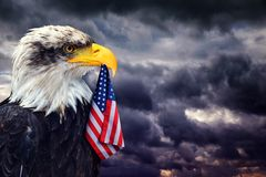 The Bald Eagle holds in the beak of the United States Flag. The Bald Eagle holds in the beak of the United States Flag on the background dark cloudy sky Royalty Free Stock Photo
