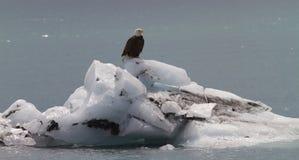 Bald Eagle on iceberg Stock Photo