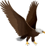 Bald eagle isolated on white - vector Stock Photo