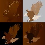 Bald eagle landing royalty free illustration