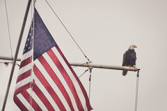 Bald Eagle on a Mast With Flag 2. A bald eagle sits on a mast next to an American Flag. Looks peaceful Stock Photo