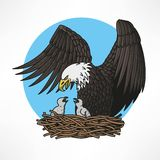 Bald eagle in the nest Royalty Free Stock Photos