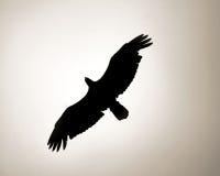 Bald Eagle Outline. Over the ocean in alaska Stock Photo