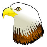 Bald Eagle Powerful Bird Pray Stock Images