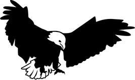 Bald Eagle predator Royalty Free Stock Photography