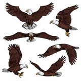 Bald eagle predatory birds vector sketch. Bald eagle icons flying with spread wings front and side view. Vector birds of prey or predatory birds, raptor eagle vector illustration