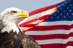 Bald Eagle. Profile of a mature bald eagle with the American flag Royalty Free Stock Photography