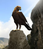 Golden Eagle Proud. 3D rendering of a majestic golden eagle sitting in the high mountains Stock Images