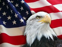 Bald eagle - proud to be american stock photos