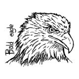 Bald eagle`s head - vector illustration sketch hand drawn with b Royalty Free Stock Image