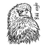 Bald eagle`s head - vector illustration sketch hand drawn with b Stock Photos
