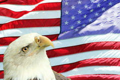Bald Eagle Set Against American Flag Stock Images