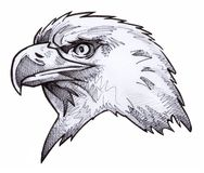 Bald Eagle Sketch Stock Images