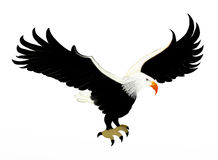 Bald Eagle Soaring in Sky. Smart Bald Eagle Soaring in The Sky, Isolated on White Background Royalty Free Stock Photo