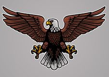 Bald eagle spread his wings Stock Image