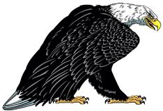White headed bald eagle tattoo. Bald eagle. Standing white headed American bird . Tattoo style vector illustration Royalty Free Stock Images