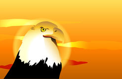 Bald Eagle Sunset. Bald Eagle in front of an orange and yellow sunset or sunrise royalty free illustration