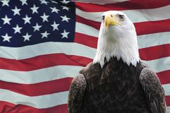 Bald Eagle and USA flag. Majestic Bald eagle in front of USA flag Royalty Free Stock Photo