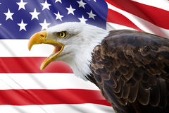 Bald eagle and USA flag. A beautiful bald eagle with a background of a usa flag Stock Photography