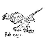 Bald eagle - vector illustration sketch hand drawn with black li Royalty Free Stock Images