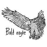 Bald eagle - vector illustration sketch hand drawn with black li Royalty Free Stock Photography