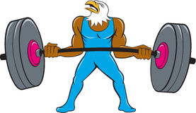 Bald Eagle Weightlifter Lifting Barbell Cartoon Royalty Free Stock Photography