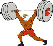 Bald Eagle Weightlifter Lifting Barbell Cartoon Royalty Free Stock Photo