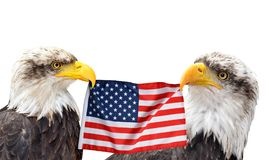 The Bald Eagles holds in the beak of the United States Flag. The Bald Eagles holds in the beak of the United States Flag isolated on white background Stock Photos