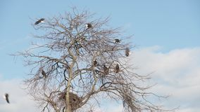 Bald Eagles Perched and Flying 4K UHD