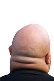 Bald head. Back of bald fat head isolated with clipping path Royalty Free Stock Images