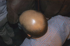 Bald head Stock Image