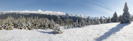 Bald Hills Panoramic. Snow capped mountains and trees at Bald Hills in Jasper National Park, Alberta, Canada stock image