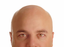 Bald man. Middle age man with bald head isolated on white background Stock Photos