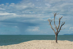 Bald tree with blue sky and ocean behind Stock Images