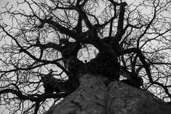 Free Bald Tree In Winter Stock Image - 113003021