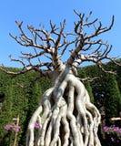 Bald tree1 Stock Photo