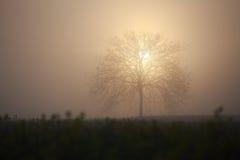 Bald Tree Royalty Free Stock Photo