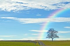 Bald tree with way and rainbow Stock Image
