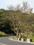 Bald tree on winter raod Royalty Free Stock Photos