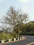 Bald tree on winter raod Stock Photos