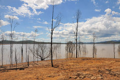 Bald trees after flood at Wivenhoe Dam, Australia royalty free stock photo