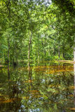 Bald  Trees reflecting in the water in a florida swamp on a warm Royalty Free Stock Images
