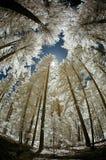 Baldacchino degli alberi Fotografia Stock Libera da Diritti