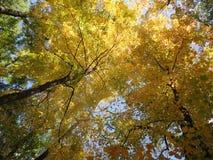 Baldacchino del fogliame di caduta di autunno fotografia stock libera da diritti
