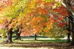 Baldacchino della foglia di autunno Fotografia Stock Libera da Diritti