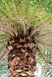 Baldacchino della palma Fotografia Stock