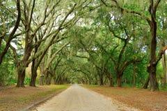 Baldacchino delle querce coperte in muschio Parco di Forsyth, Fotografia Stock