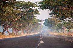 Baldacchino di albero Fotografie Stock Libere da Diritti