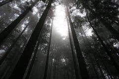Baldacchino di albero Fotografia Stock